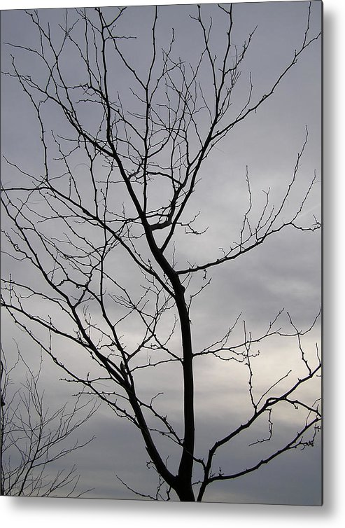 Tree Metal Print featuring the photograph Tree Silhouette by Richard Mitchell