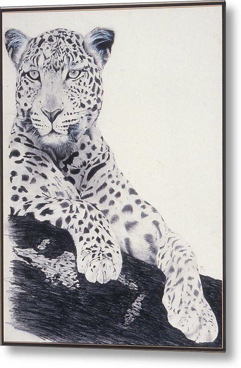 Cat Metal Print featuring the drawing White Loepard by Brett Cremeens