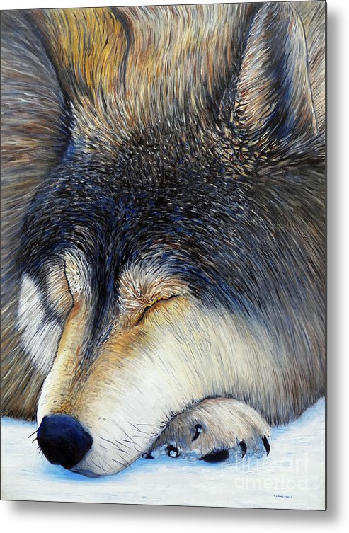 Wolf Metal Print featuring the painting Wolf Dreams by Brian Commerford