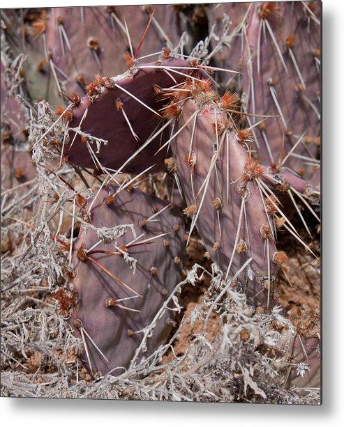 Mesa Metal Print featuring the photograph Desert Prickly Pear Cactus by Claus Siebenhaar
