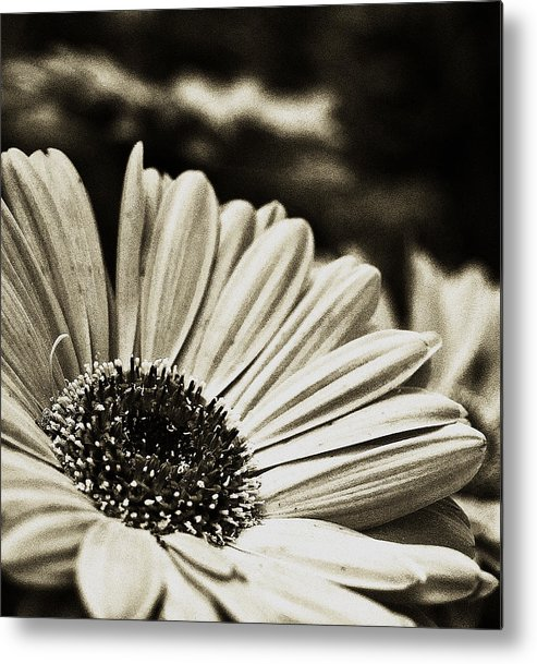 Flowers Metal Print featuring the photograph Openly Honest by Tanya Jacobson-Smith