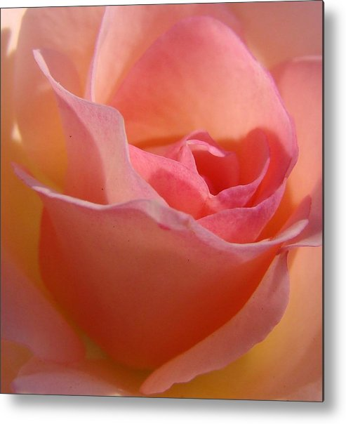 Rose Metal Print featuring the photograph Another Pink Rose by Liz Vernand
