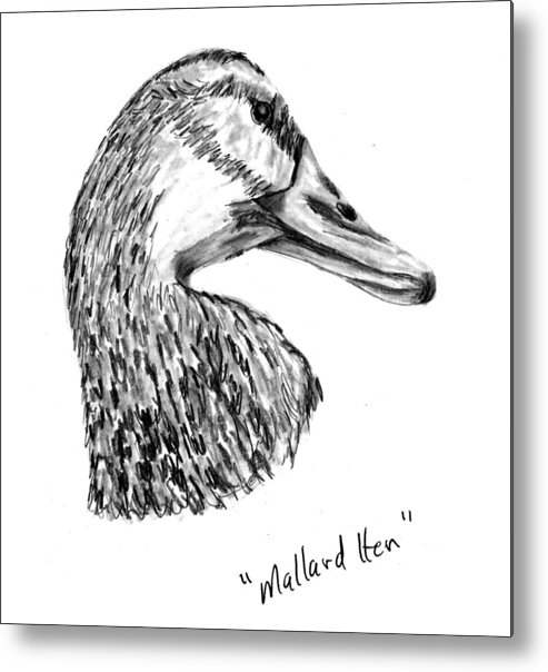 Duck Metal Print featuring the drawing Head Of A Mallard Hen by Kevin Callahan