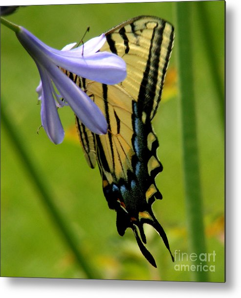 Butterfly Metal Print featuring the photograph Hidden Beauty by Gail Salitui