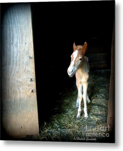 Foal Metal Print featuring the photograph Is This The World by Rabiah Seminole