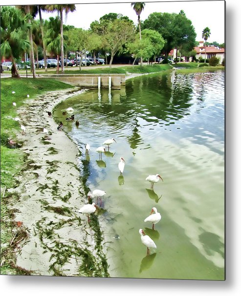 Birds Metal Print featuring the photograph Storks Galore by Francesco Roncone