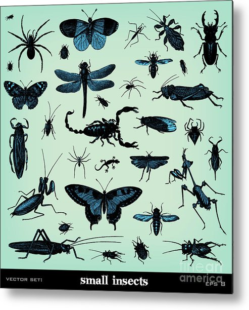 Engraving Metal Print featuring the digital art Engraving Vintage Insect Set From by Pio3