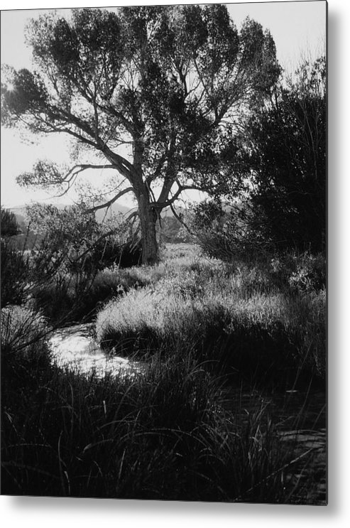 Landscape Metal Print featuring the photograph Creekside Summer by Allan McConnell