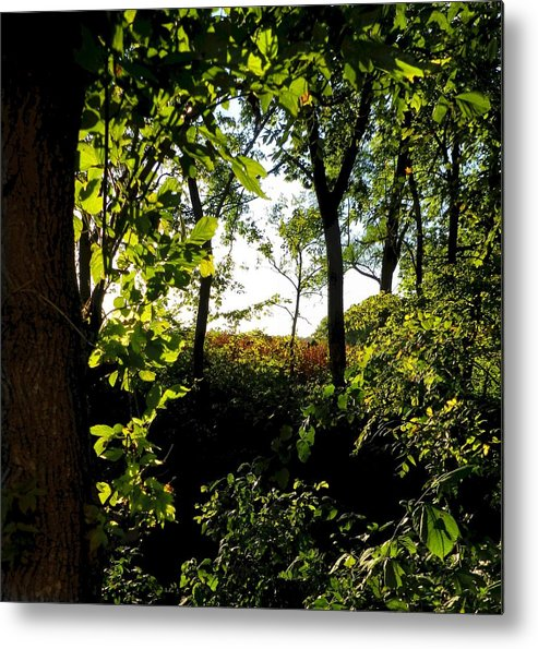 Rural Scene Metal Print featuring the photograph Across The Way by Julie Dant