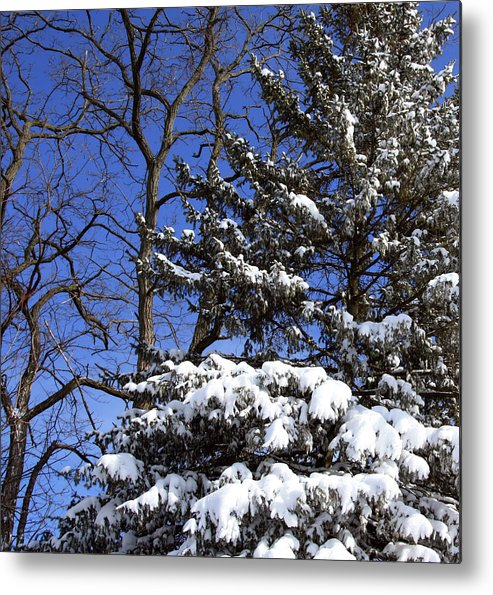 Blizzard Metal Print featuring the photograph After The Blizzard by Joanne Coyle