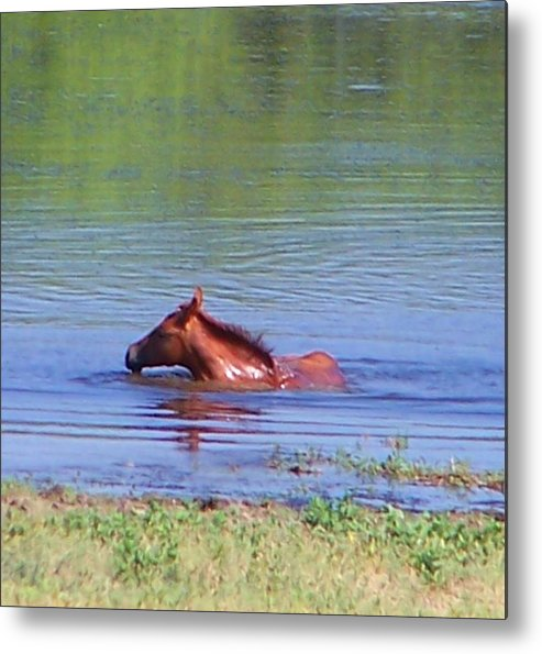 Horses Metal Print featuring the photograph Look Mum I Can Swim. by Lilly King