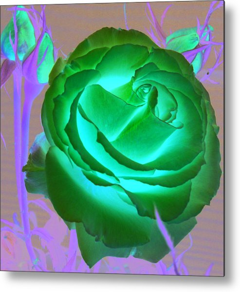 Rose Metal Print featuring the photograph Pink Rose by Mary Gaines