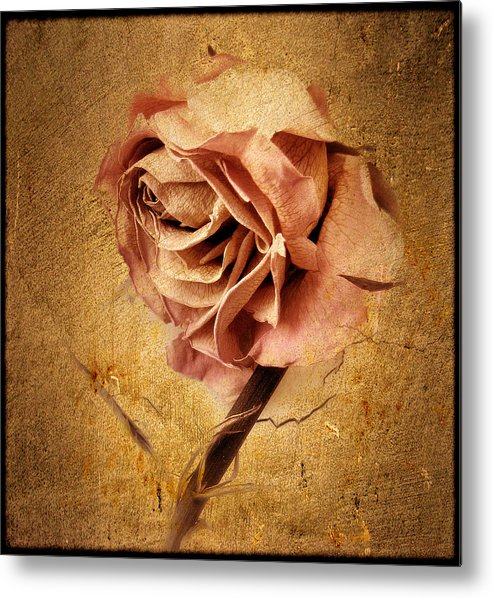 Flower Metal Print featuring the photograph Textured Rose by Jessica Jenney
