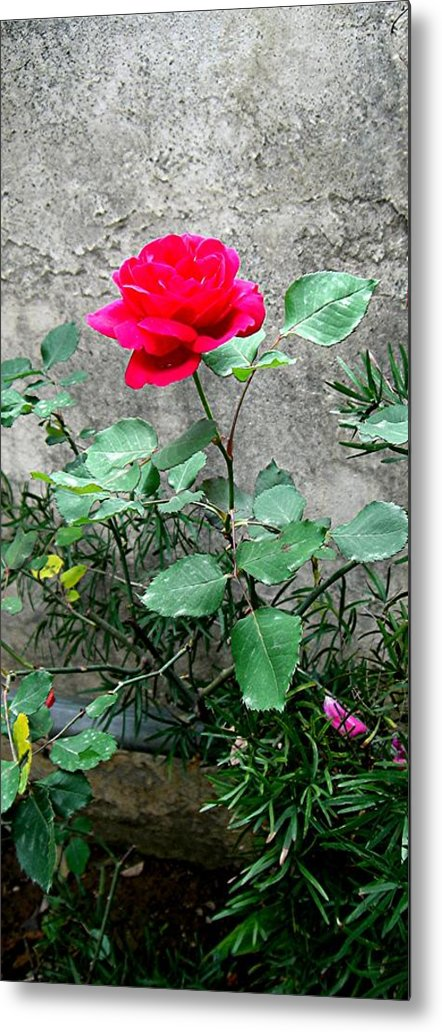Rose Metal Print featuring the photograph Pink On Grey Stone by Caroline Urbania Naeem