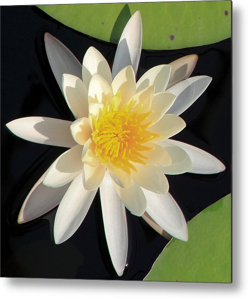 Lilly Pad Metal Print featuring the photograph Lilly Pad by Steve Schwarz