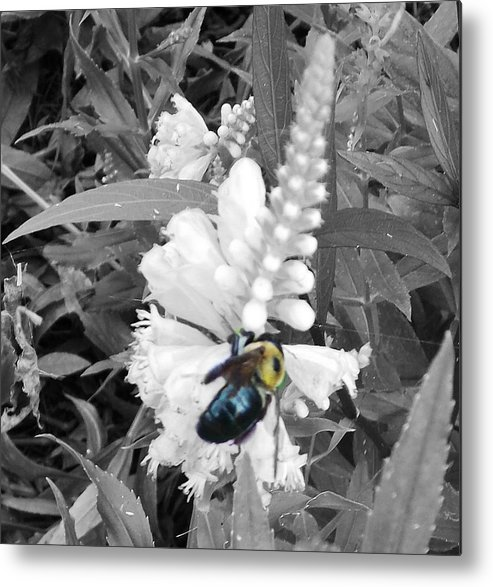 Metal Print featuring the photograph The Bee by Regina McLeroy