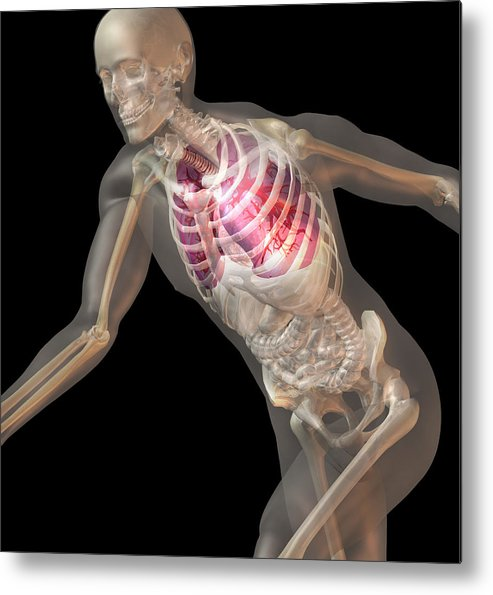 Vertical Metal Print featuring the digital art Digitally Generated Image Of Running Human Representation With Inner Human Organs Visible by Calysta Images