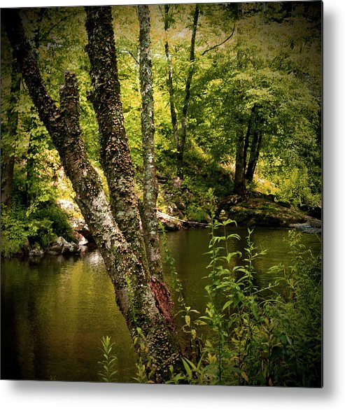 Landscape Metal Print featuring the photograph Quiet View by Nancy Graham