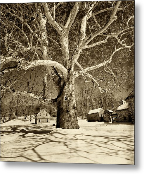 Sycamore Tree Metal Print featuring the photograph Lafayette Headquarters by Jack Paolini