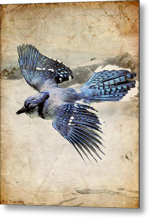 Blue Jay Metal Print featuring the digital art Blue Jay In Flight by Ray Downing