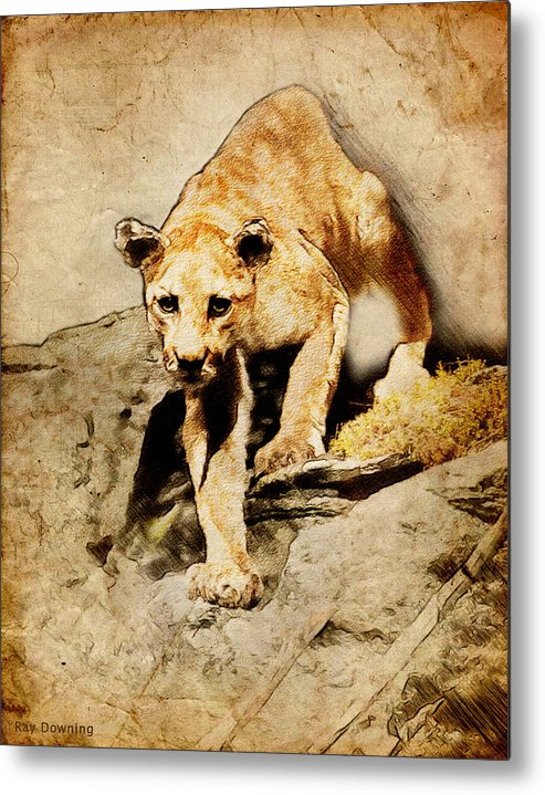 Puma Metal Print featuring the digital art Cougar Hunting by Ray Downing