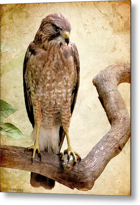 Eagle Metal Print featuring the digital art Hawk With Fish by Ray Downing