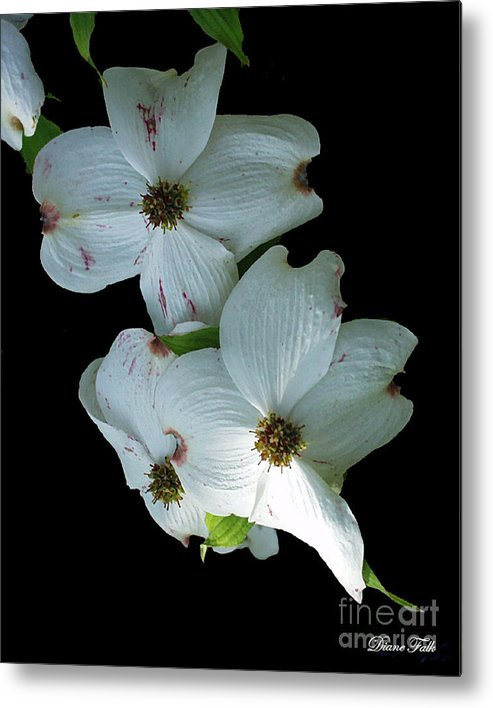 Flower Metal Print featuring the photograph Flower by Diane Falk