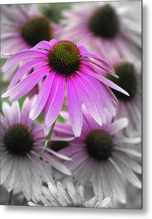 Flowers Metal Print featuring the photograph Coneflowers by Marty Koch