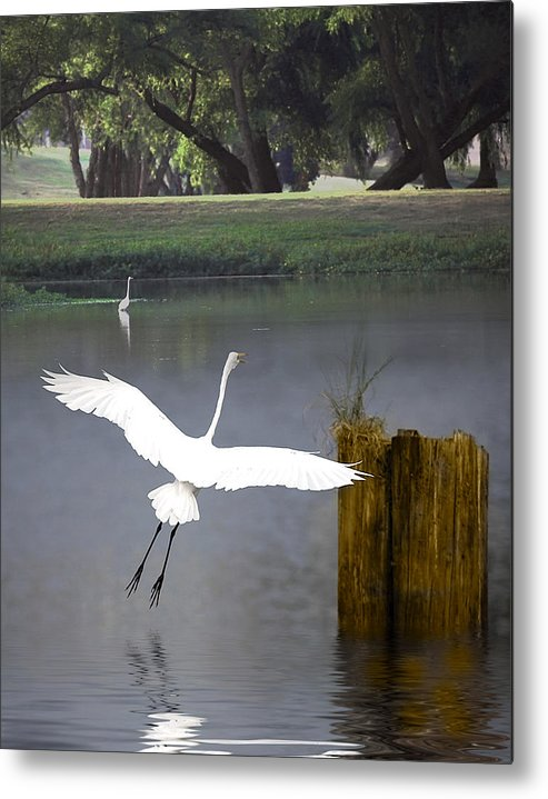 Egret Metal Print featuring the photograph Graceful by Cecil Fuselier