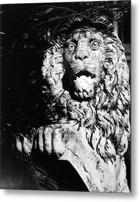 Lion Metal Print featuring the photograph King Of The Concrete Jungle by Allan McConnell