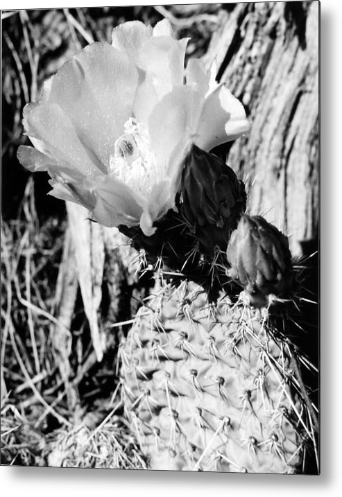 Nature Metal Print featuring the photograph Prickly Beauty by Allan McConnell