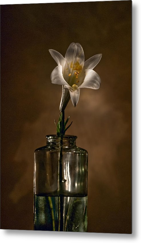 Flower Metal Print featuring the photograph Flashlight Series Easter Lily 3 by Lou Novick