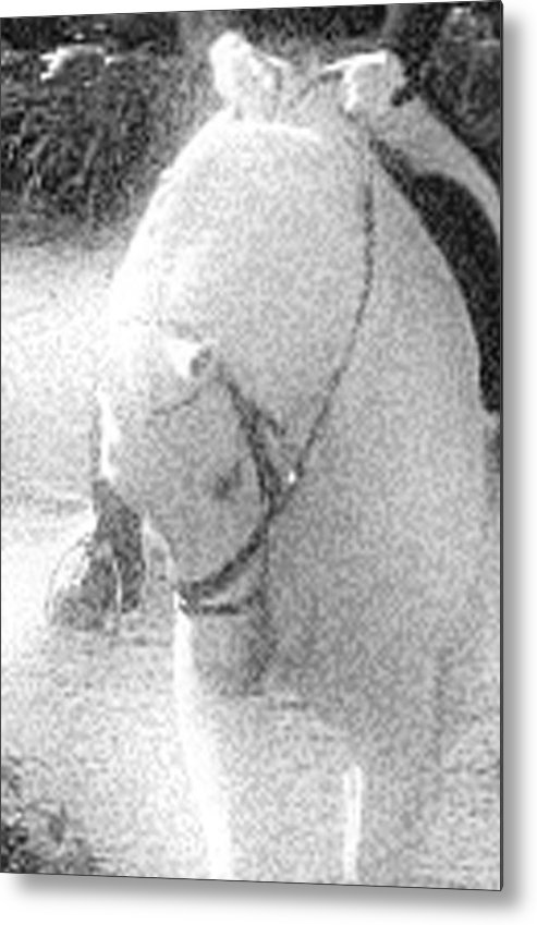 Horse Metal Print featuring the photograph Head Tuck by Donna Thomas