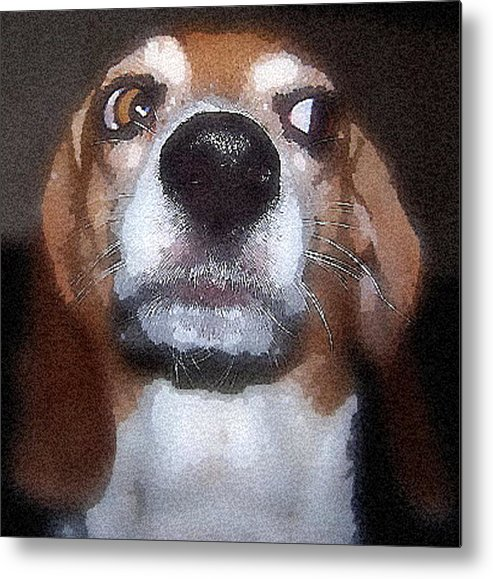 Beagle Metal Print featuring the photograph Lady 2 by April Patterson