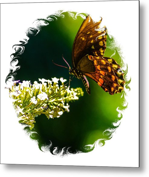 Metal Print featuring the photograph Butterfly by Gerald Kloss