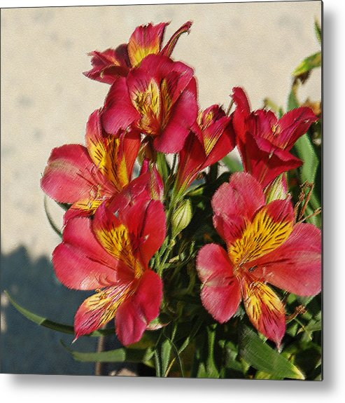 Alstroemeria Metal Print featuring the photograph Alstroemeria In Pastel by Suzanne Gaff