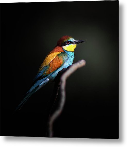 Animal Metal Print featuring the photograph Colorful Darkly by Fegari