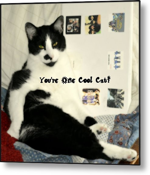 Cat Metal Print featuring the photograph Cool Cat Greeting Card by Kathy Barney