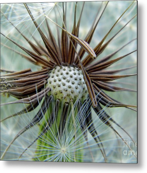 Dandelion Metal Print featuring the photograph Dandelion Seed Puff by D Hackett