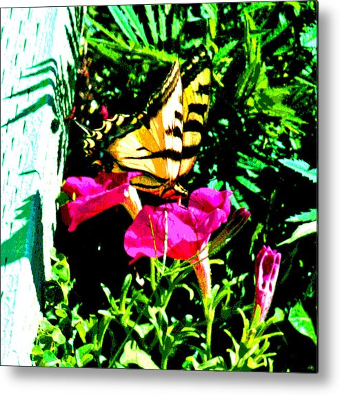 Butterflys Metal Print featuring the digital art Delta Butterfly Dazes by Joseph Coulombe