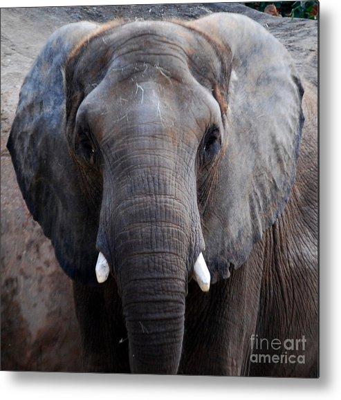 Grey Elephant Metal Print featuring the photograph Jumbo by Nancy Bradley