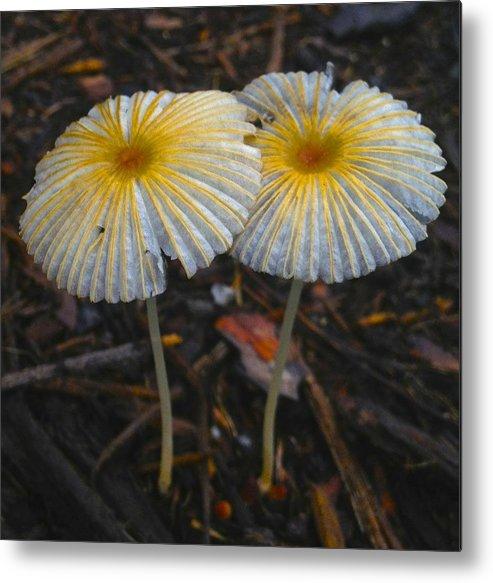 Nature Metal Print featuring the photograph Mushroom Flowers by Jennifer Lamanca Kaufman