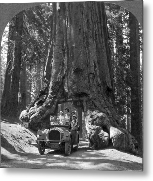 1915 Metal Print featuring the photograph The Wawona Giant Sequoia Tree by Underwood Archives