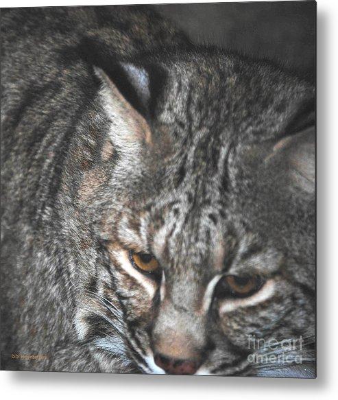 Bobcat Metal Print featuring the photograph Bobcat Love by DiDi Higginbotham