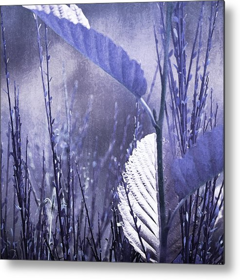 Lavender Metal Print featuring the photograph Lavender Leaves by Bonnie Bruno