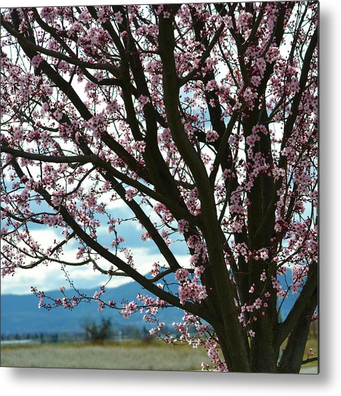 Flowering Tree Metal Print featuring the photograph Pretty Spring Flowering Tree by P S