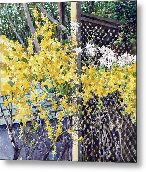 Peter Sit Watercolour Metal Print featuring the painting Stella Magnolia And Forthysia by Peter Sit