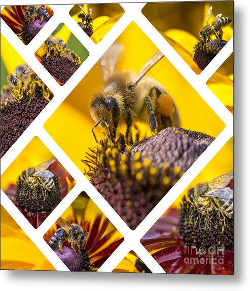 Honey Metal Print featuring the photograph Collage Of Western Honey Bee by Mariusz Prusaczyk