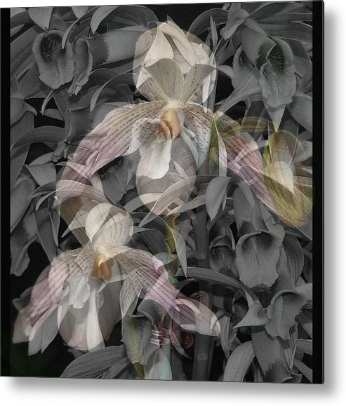 Orchid Metal Print featuring the photograph Angelic Hosts The Hooded Nun Orchid by Mindy Newman