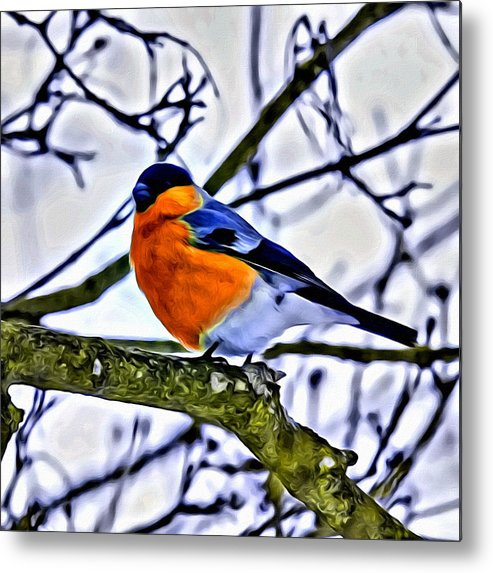 Bird Metal Print featuring the photograph Blue Bird by Modern Art